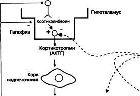 Кортикостероиды реферат по фармхимии пептиды для сетчатки глаза